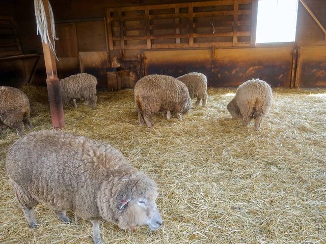 羊さんのお家 3_edit