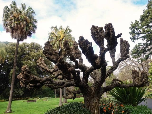 王立植物園 9_edit