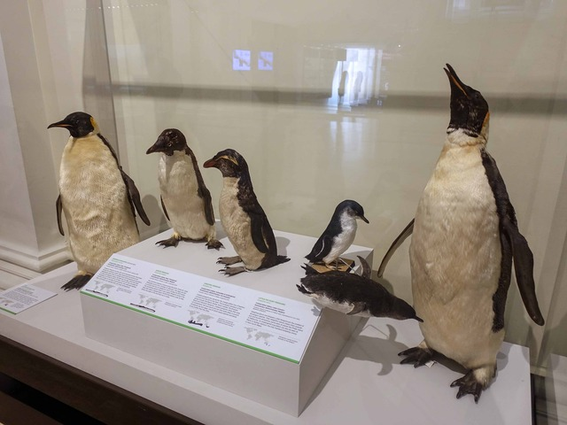 ペンギン 1_edit