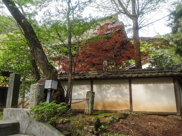 墓前の桜_edit