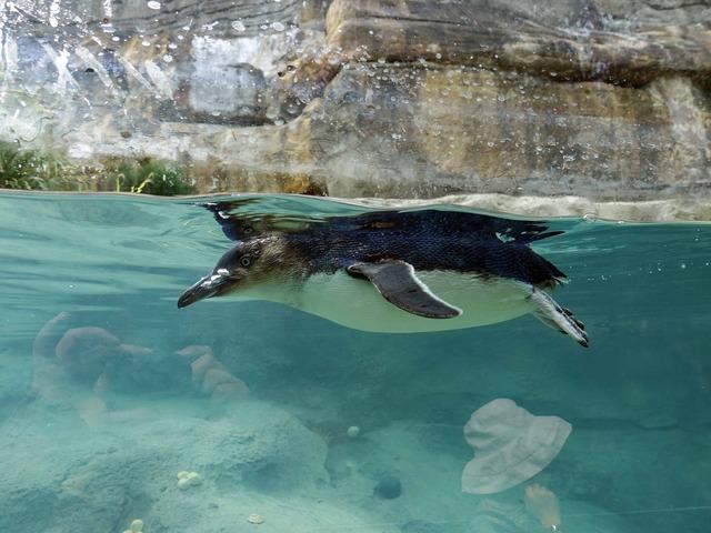 リトルペンギン 4_edit