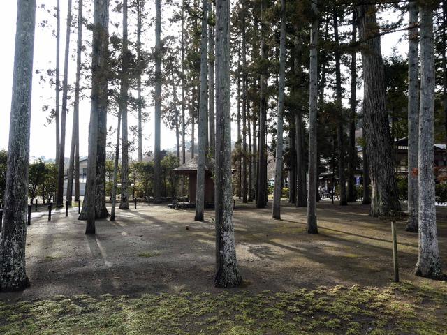 杉の木 1_edit