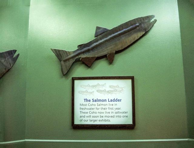 Salmon Ladder 1_edit