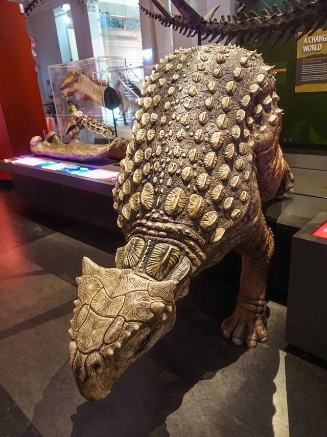 アンキロサウルス 2_edit