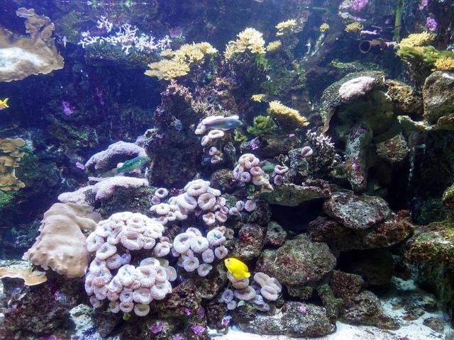 サンゴ礁 2_edit