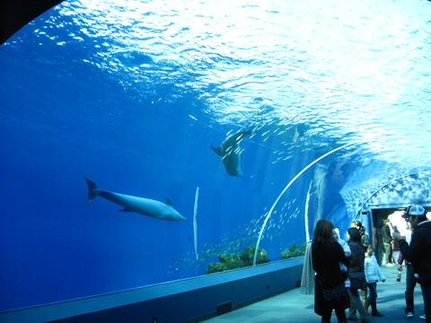 イルカ水槽 1