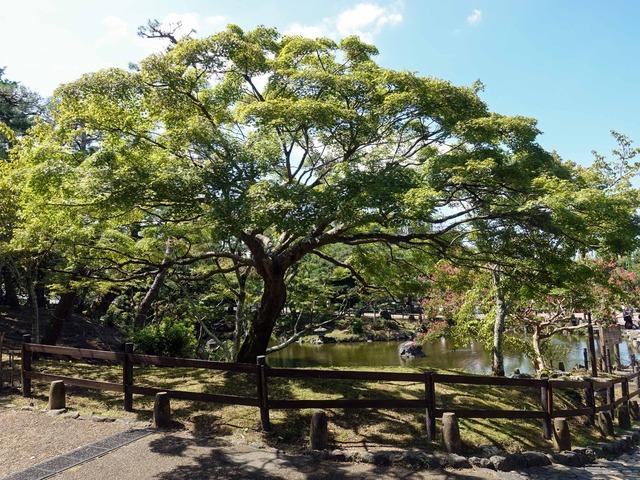 円山公園 9_edit