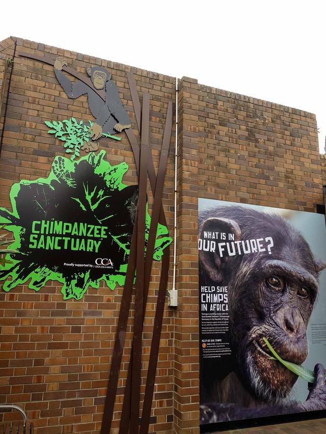 チンパンジー 1_edit