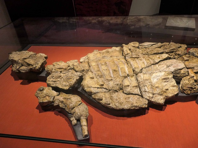 クンバラサウルス 2_edit