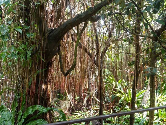 アジア熱帯雨林区 4_edit