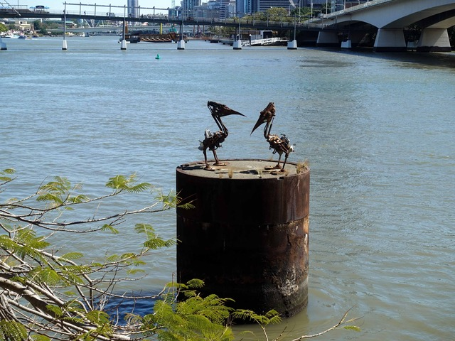 Pelicans_edit