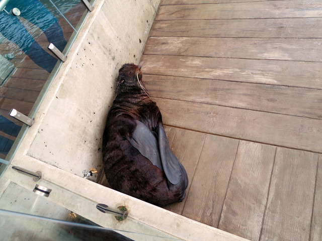 Marine Mammal Center 3_edit
