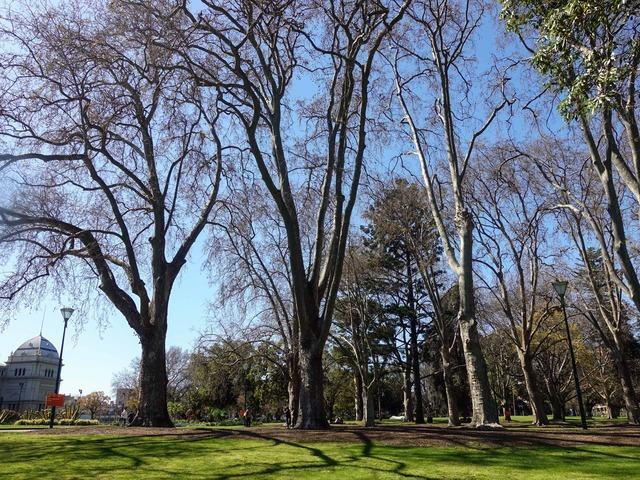 カールトン庭園 11_edit