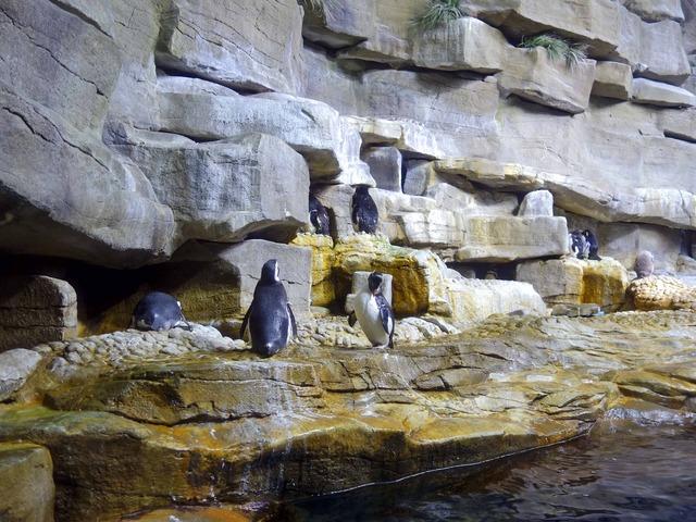 ペンギン 4_edit
