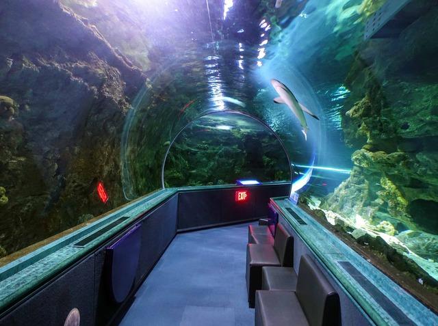 水中トンネル 25_edit