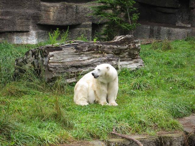 Polar Bear_edit