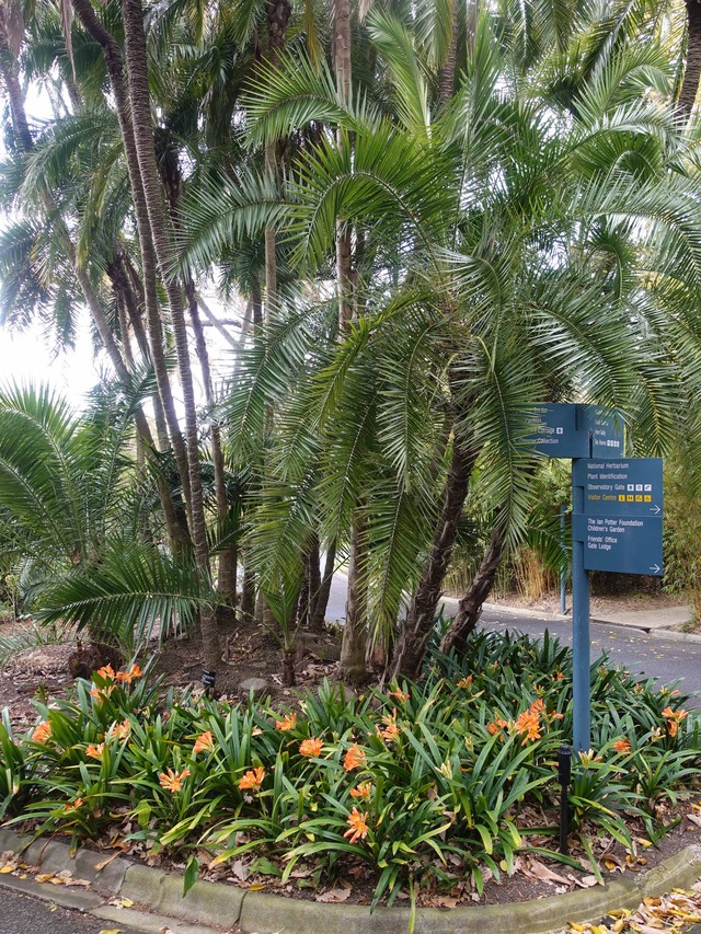 王立植物園 17_edit