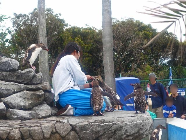 ペンギンの餌付け 2_edit