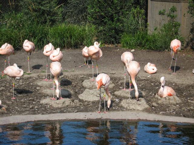 Flamingo 3_edit