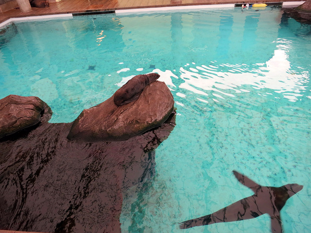 Marine Mammal Center 4_edit