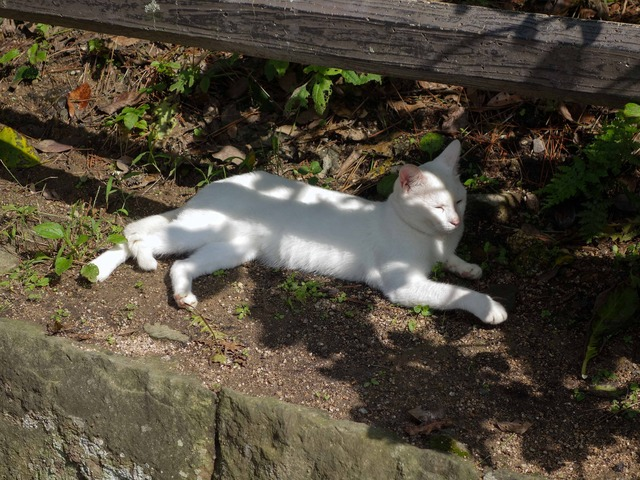 お城周辺の猫 10_edit