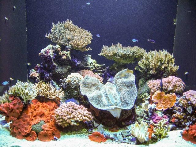 Pacific Coral Reef 1_edit