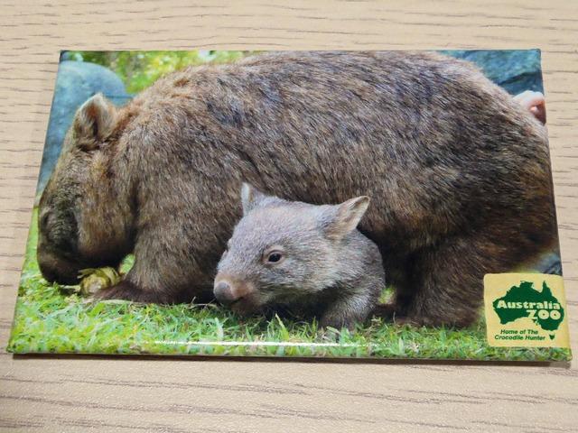 マグネット(オーストラリア動物園) 2_edit