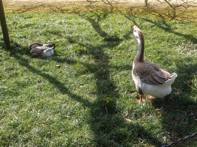 白鳥池の野鳥たち 3_edit