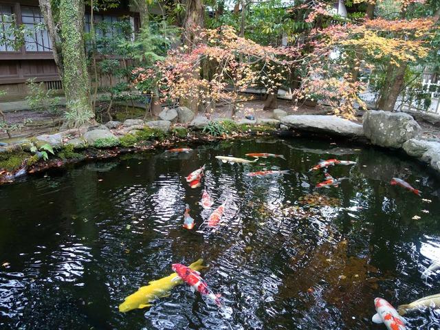 饗膳所脇の池 4_edit