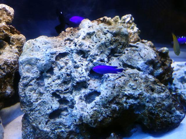 サンゴ礁の浅瀬 2_edit