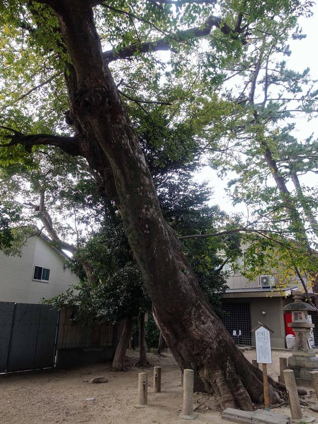 椋の木 2_edit