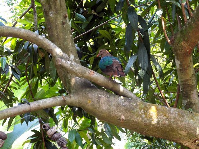 Rainforest Aviary 2_edit
