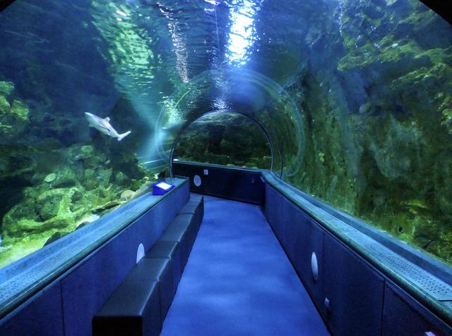 水中トンネル 14_edit
