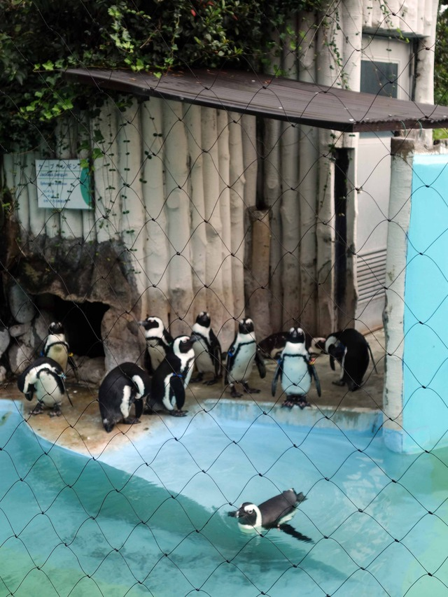 ペンギン 7_edit