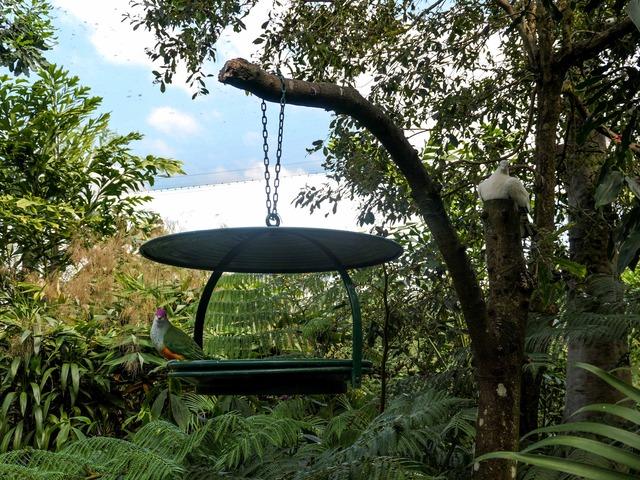 Rainforest Aviary 4_edit