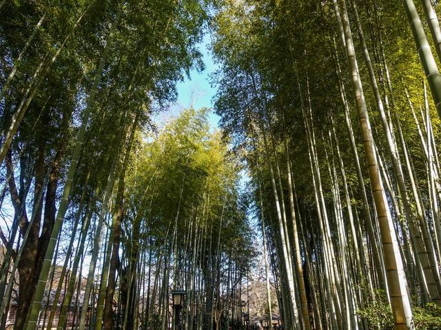 竹林の小径 18_edit