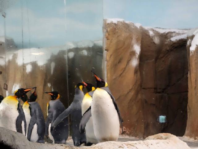 オウサマペンギン 1_edit