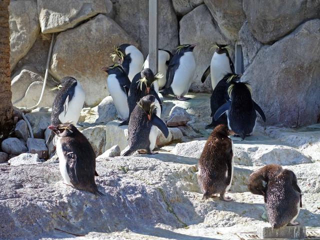 ペンギン島 7_edit