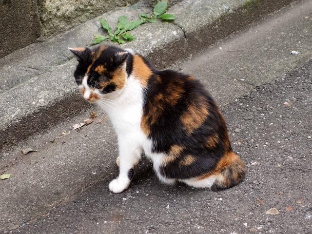 猫 3_edit
