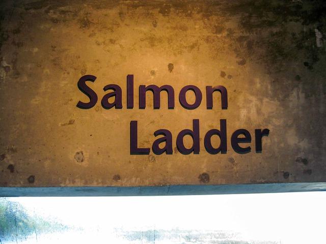 Salmon Ladder 2_edit