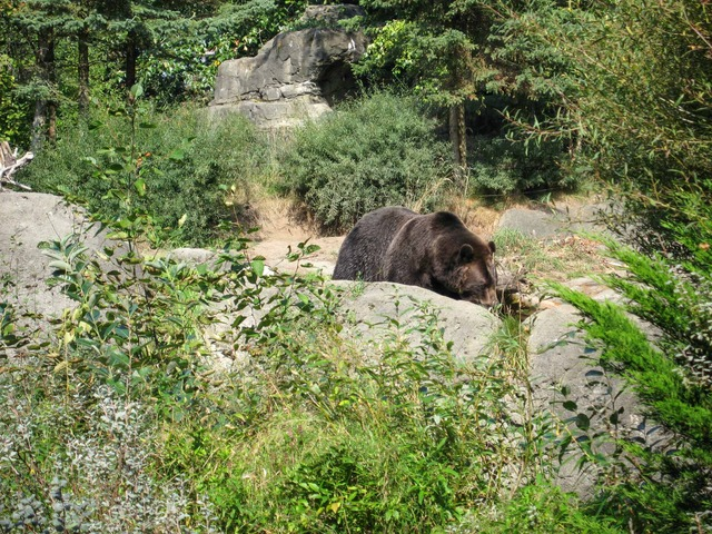 Brown Bear 6_edit