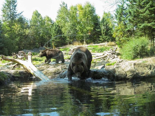 Brown Bear 4_edit