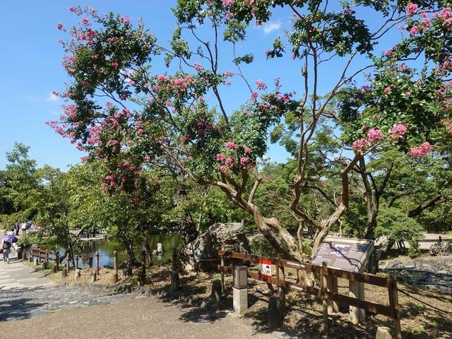円山公園 8_edit