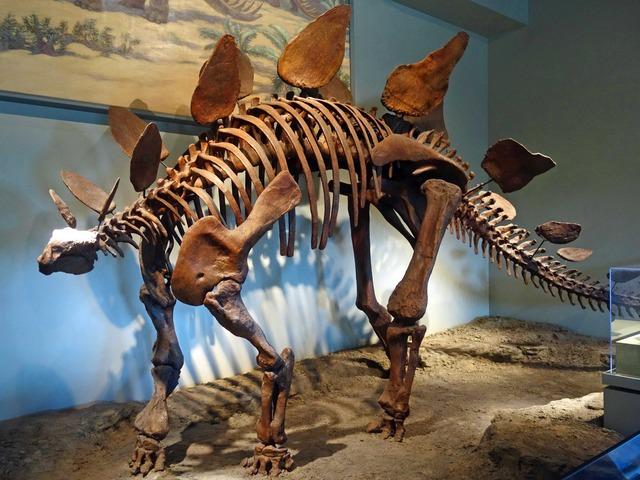 ステゴサウルス 2_edit