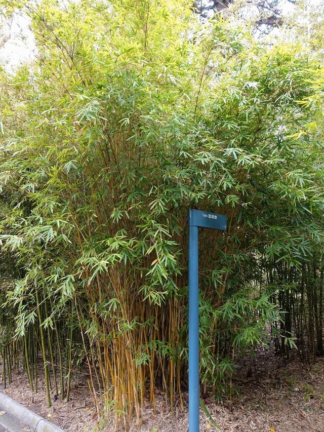 王立植物園 37_edit