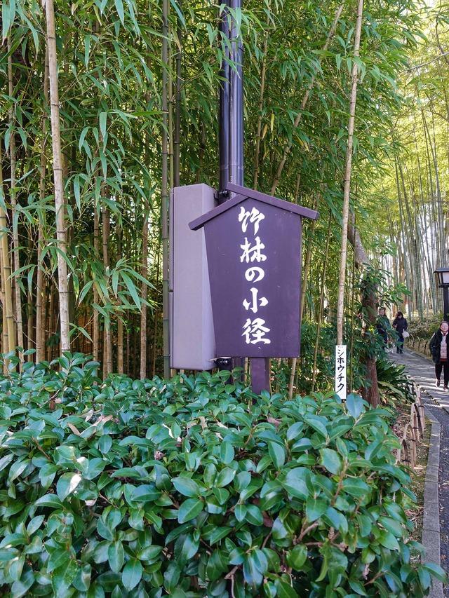 竹林の小径 1_edit