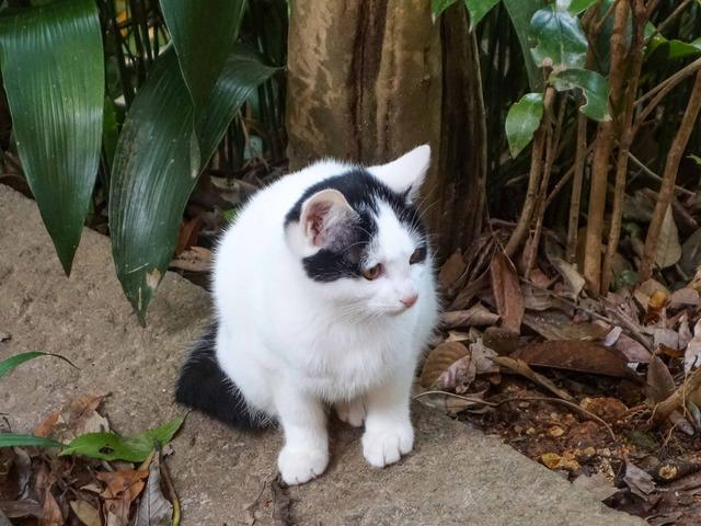 千本鳥居の猫 5_edit