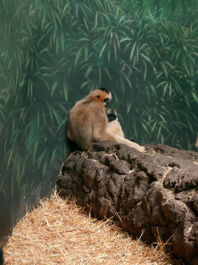 Helen Brach Primate House 8_edit
