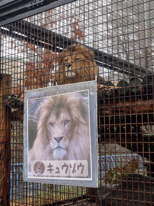 ライオン 2_edit