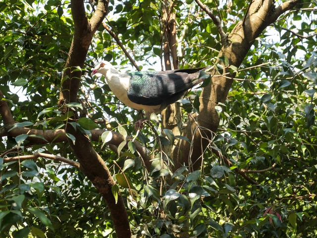 Rainforest Aviary 1_edit